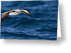 Albatross Of The Deep Blue Greeting Card by Basie Van Zyl