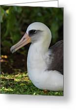 Albatross Portrait Greeting Card