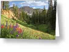 Albion Basin Wasatch Mountains Utah Greeting Card by Utah Images