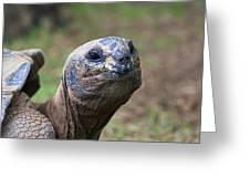 Aldabra Giant Tortoise's Portrait Greeting Card