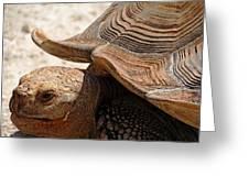 Aldabra Tortoise Greeting Card