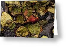 Alder Leaves Dan Creek 2015 Greeting Card
