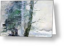 Alders And Cedar Greeting Card