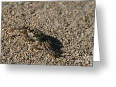 Ale Eke Ohiki Kuau Sand Crab Greeting Card