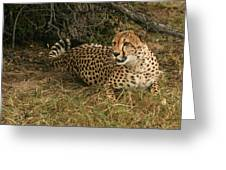 Alert Cheetah Greeting Card