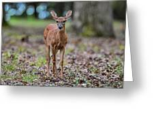 Alert Fawn Deer In Shiloh National Military Park Tennessee Greeting Card