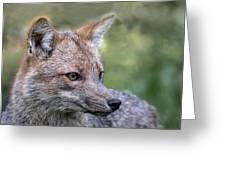 Alert Fox  Greeting Card