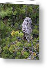 Alert Great Gray Owl Greeting Card