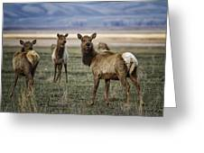 Alert On The Home Front Greeting Card