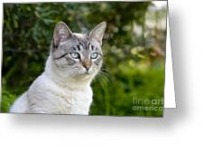 Alert Tabby With Blue Eyes Greeting Card