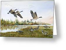 Aleutian Geese At Lake Earl Greeting Card
