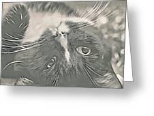 Alfie Greeting Card