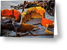 Algae At Low Tide Greeting Card by Heiko Koehrer-Wagner