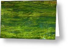 Algae Greeting Card