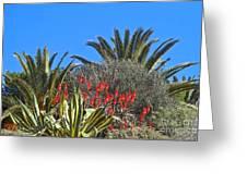 Algarve Plants Greeting Card