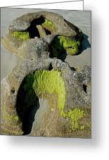 Alge On Beach Rock Formation Greeting Card