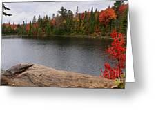 Algonquin Provincial Park Ontario Greeting Card