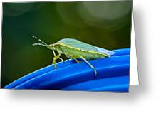 Alice The Stink Bug 2 Greeting Card