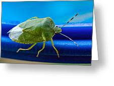 Alice The Stink Bug 3 Greeting Card