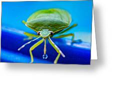 Alice The Stink Bug 4 Greeting Card