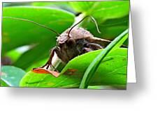 Alien Moth Greeting Card