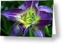 Alien On Flower Greeting Card