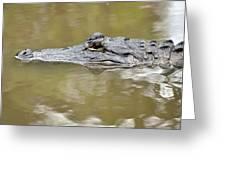 Alligator Stealth Greeting Card