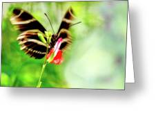 All A-flutter Greeting Card