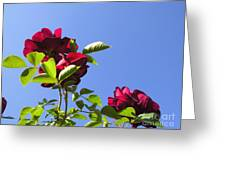 All About Roses And Blue Skies V Greeting Card