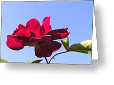 All About Roses And Blue Skies Viii Greeting Card