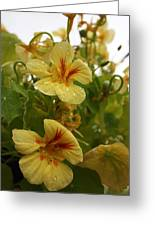 All About Yellow Greeting Card
