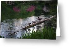 All Along The Log Greeting Card