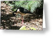 All Clear - Bird Looking Under Legs Greeting Card