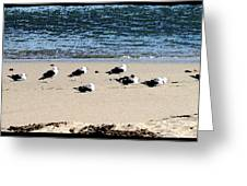 All My Gulls In A Row Greeting Card