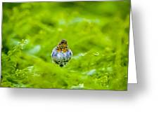 All Puffed Up Greeting Card