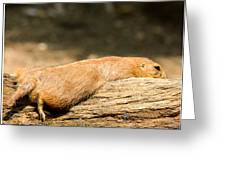 All Stretched Out Greeting Card