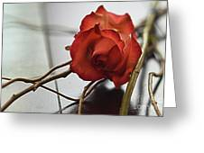 All Tangled Up Greeting Card