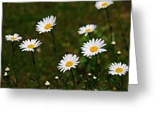 All The Daisies Greeting Card