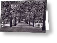 Allee Way Bw Greeting Card
