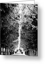 Allee_des_arbres Greeting Card