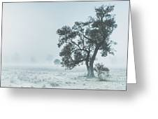 Alleena Winter Landscape Greeting Card