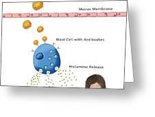 Allergic Response, Illustration Greeting Card