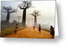 Alley Of The Baobab Greeting Card