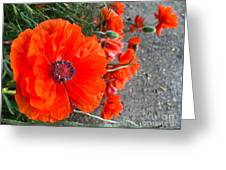 Alley Orange Red Poppies  Greeting Card