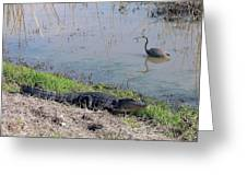 Alligator And Heron Greeting Card