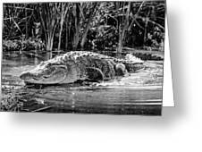 Alligator Bags Of Port Aransas Greeting Card