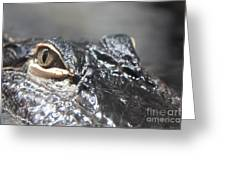 Alligator Eye Greeting Card
