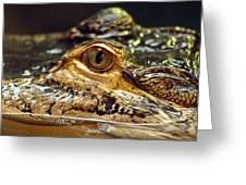Alligator Eye Close Up-2 Greeting Card