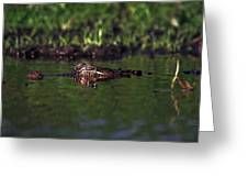 Alligator Eyes Greeting Card