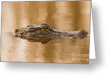 Alligator Head Greeting Card